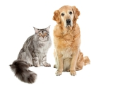 Fotografie cat and dog on a white background