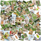 Fényképek a collage of photos of golden retriever 101 pieces a collection of photos isolated on a white background which can be found in high resolution in my portfolio