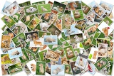 Fotografie a collage of photos of golden retriever 101 pieces a collection of photos isolated on a white background which can be found in high resolution in my portfolio