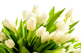 Fotografie Bunch of white tulips spring flowers
