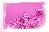 pink flower frame with puzzle of flowers for background