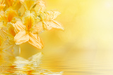 Photo yellow rhododendron azalea with shallow focus water reflection and space for text