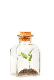small green plantation in transparent glass bottle on white background