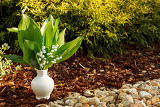 Fotografie blooming lily of the valley in white vase in spring garden