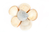 beautiful sea shells close up on white background