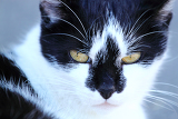 very nice closeup portrait of cat
