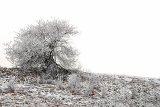 beautiful winter scene with frozen single tree with space for text