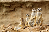 family looking for visitors in zoo
