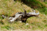 disproved tree trunk lying on the meadow