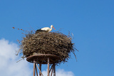 Fotografie a mother white stork ciconia ciconi bird on a chimney