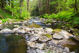 small wild river in bohemian forest on vysocina