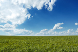 Fotografia beautiful summer rural landscape with green corn field and blue sky