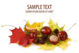 Photo colorful autumn leaves chestnuts and cones on white background