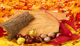 colorful autumn leaves and chestnuts on leaves background