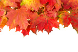 red autumn leaves frame with space for your text