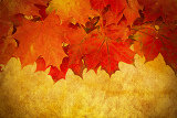 grunge red autumn leaves frame with space for your text