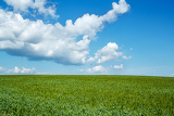 beautiful summer rural landscape with green field and blue sky
