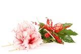bouquet of pink lily flower on white background