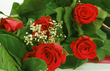 Fotografia bouquet of fresh red roses on white with space for copy in the side