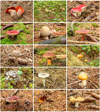 hi resolution twelve summer mushrooms in one collection