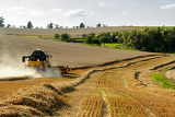 yellov combine on field harvesting wheat in sunny weather