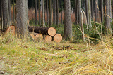pile of wood in forest grass road logs ready for winter