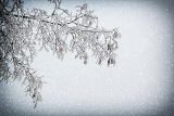 snowy branch with vignette and snowfall for background