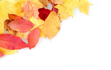 red and yellow autumn leaves frame with space for your text