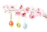 hanged bright color easter eggs with bows on spring flower isolated on white background