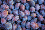 ripe purple and blue plums blackthorns background texture detail