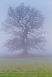Fotografie cold misty morning with tree in the background and fog