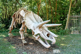 Fényképek prehistoric dinosaur triceratops fossil skeleton over natural background