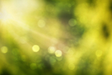 abstract real nature green blurred background with bokeh
