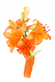Fotografie close up detail of flowering orange lily isolated on white