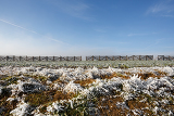 Fotografia winter background with frost grass and snowdrift barrier against blue sky