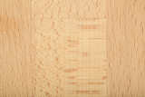 texture of glued hardwood oak beech for background use