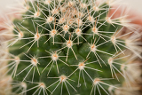 Fotografia macro detail of quills and prickly cactus spines