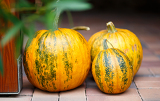 Fotografie autumn nature concept ripe three fall pumpkin outdoor
