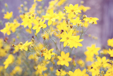 Fotografia spring flower in garden with shallow focus and space for text in pastel retro colors