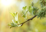 green spring background with shallow focus bokeh and sunlight