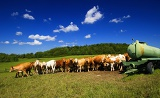 Spring. Louka, herd, cows, farm, tank, breeding, cattle and blue sky.