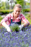 Fotografie Garden center woman in lavender flowerbed smiling