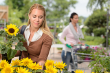 Woman choosing potted sunflower in garden center