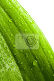 Fotografia macro water drops on green plant leaf for natural background wallpaper or backdrop use