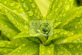 macro water drops on green plant leaf for natural background wallpaper or backdrop use