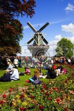 Spring. Park, garden, flowers, people and windmill. Keukenhof - Netherlands.