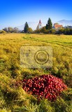 Fotografie Autumn, harvest, fruit, villages and mountains. Great Fatra - Slovakia.