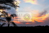african sunset with palm tree in front namibia