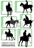 Fotografie big collection of horse silhouettes vector illustration
