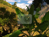 Photo Banana trees, mountains and jungle